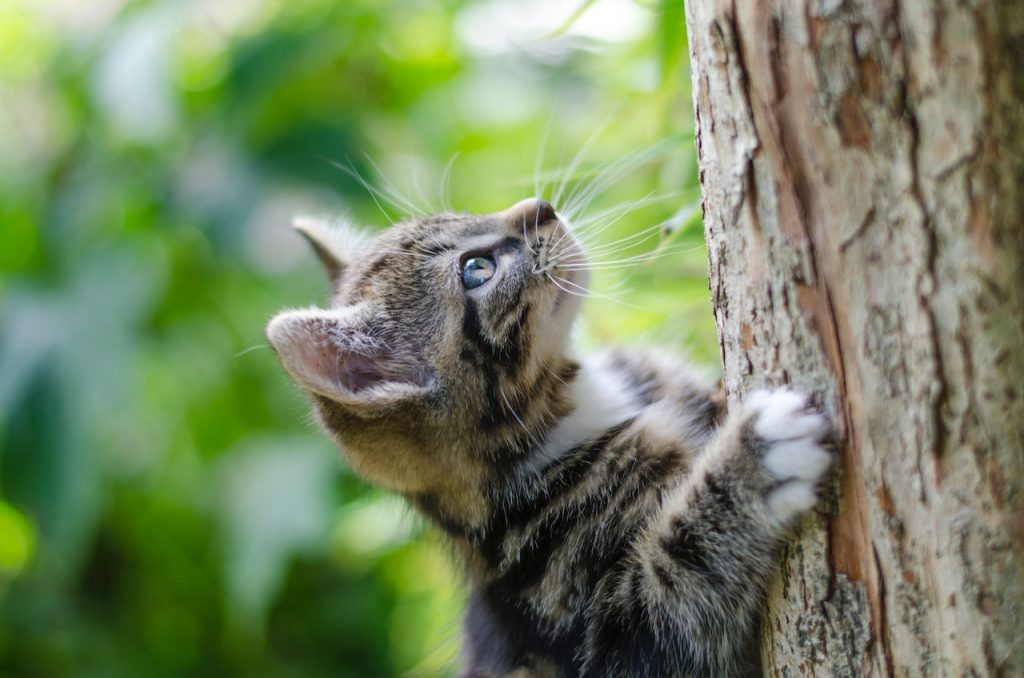 Cat-and-Tree