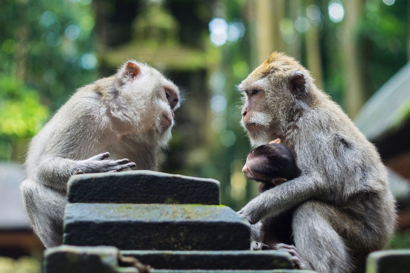 Two monkeys sitting, appearing to talk to each other